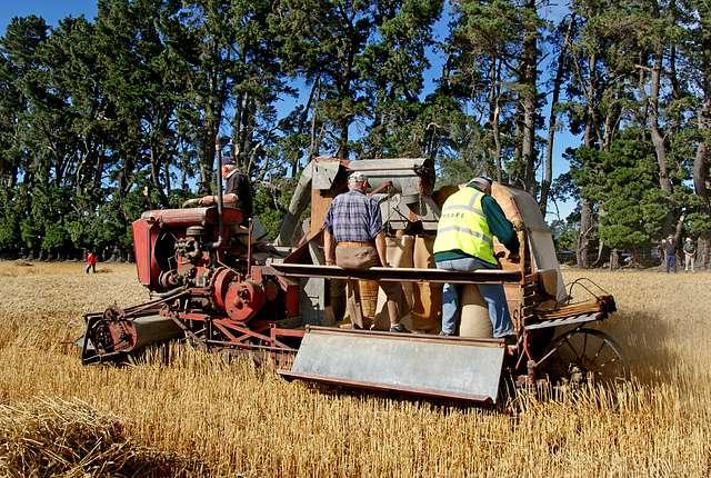 Sunshine KT 1938. Harvesting wheat.