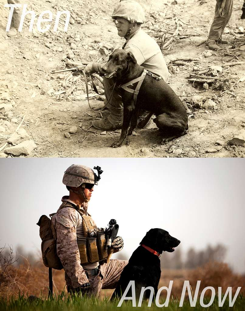The Same Breed