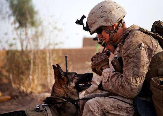 Marine's Best Friend