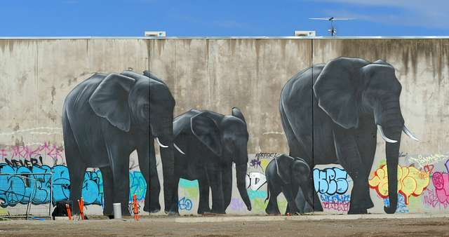 "The ""urban jungle"" Christchurch NZ"