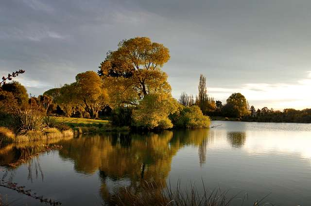 Evening light at the pond.