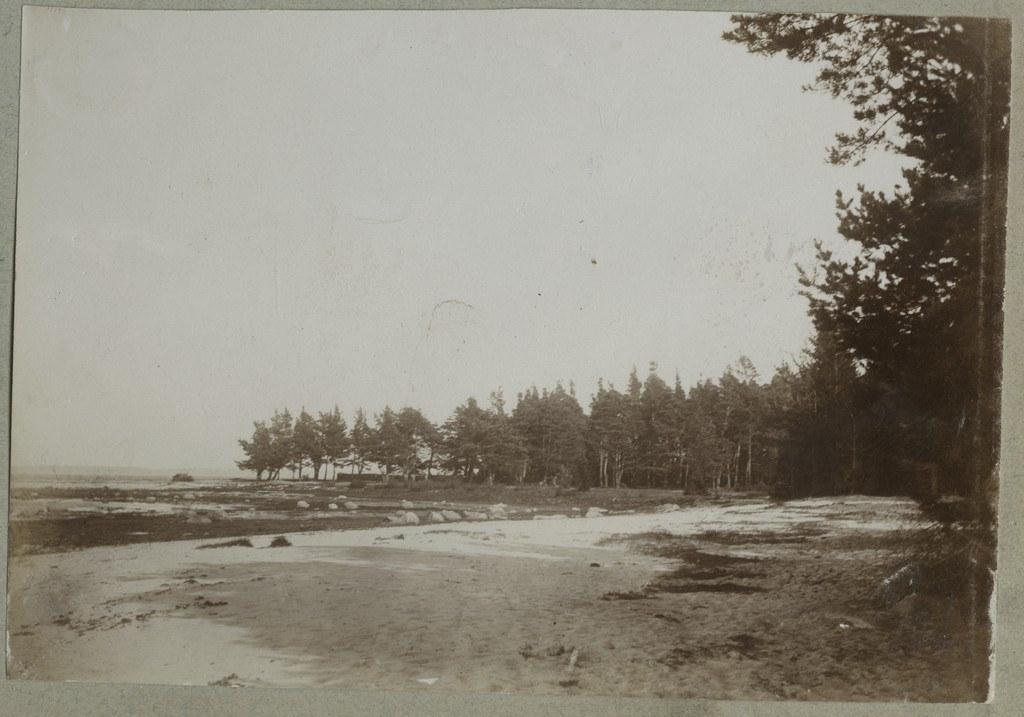 Adruga kaetud rand / Beach covered with seaweed