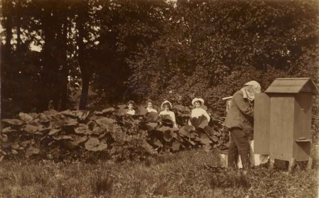 Guido Maydell Teenuse mõisas mesipuud tühjendamas, enne 1913 / Guido Maydell harvesting honey in Teenuse manor, before 1913