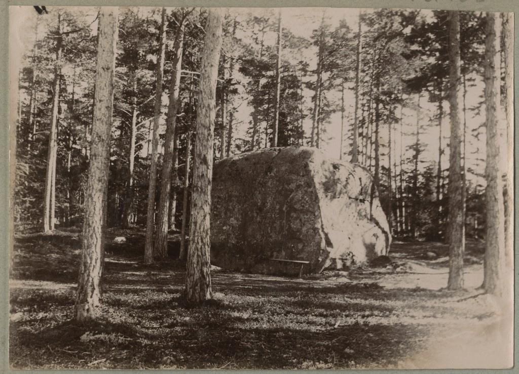 Suur rändrahn metsas / A large erratic boulder in the woods
