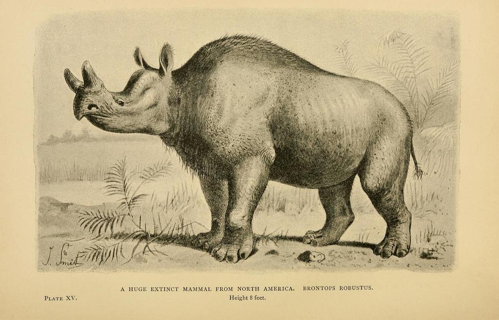 A Huge Extinct Mammal from North America. Brontops robustus