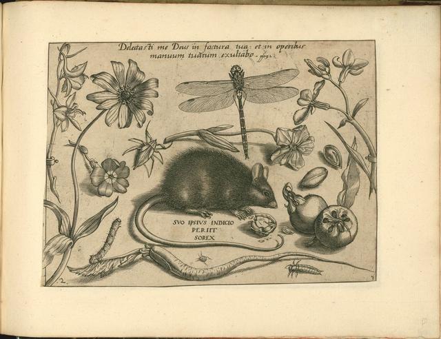 Archetypa studiaque patris - Joris Hoefnagel (1592) i