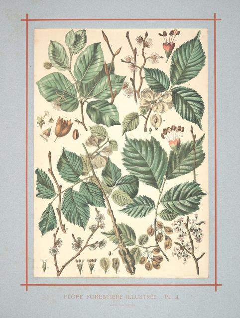 Flore forestière by C de Kirkwan, 1872 c