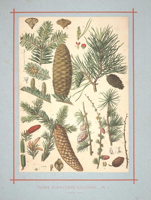 Flore forestière by C de Kirkwan, 1872