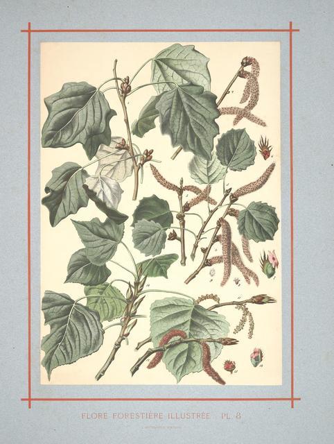 Flore forestière by C de Kirkwan, 1872 g