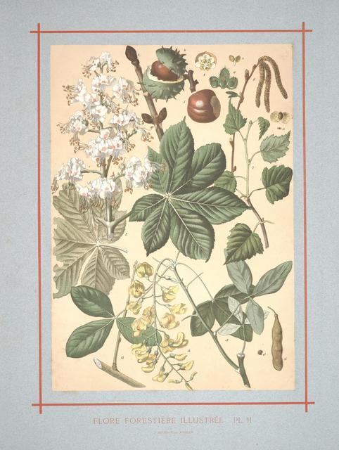 Flore forestière by C de Kirkwan, 1872 i
