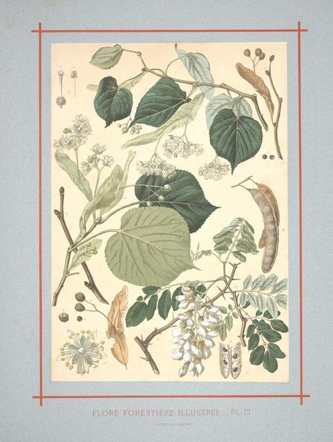 Flore forestière by C de Kirkwan, 1872 j