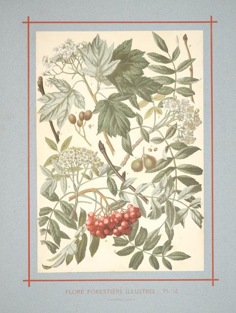 Flore forestière by C de Kirkwan, 1872 k