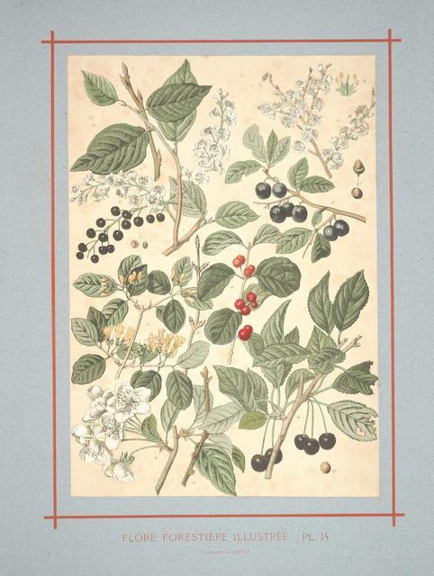 Flore forestière by C de Kirkwan, 1872 l