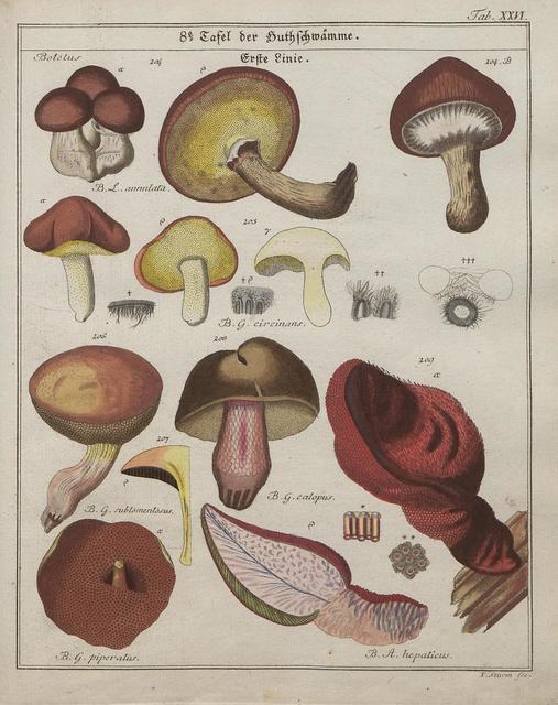 Das System der Pilze und Schwämme, 1817 j