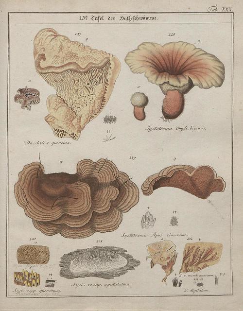 Das System der Pilze und Schwämme, 1817 n