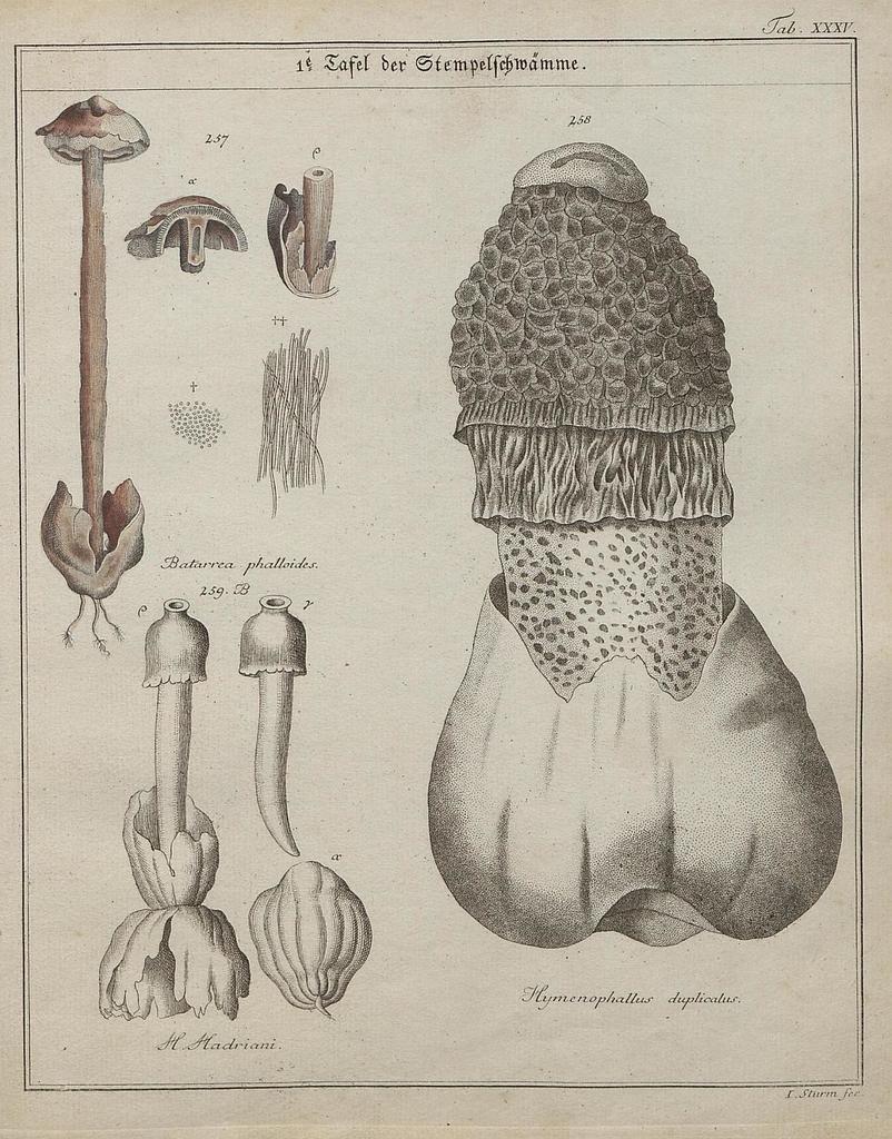 Das System der Pilze und Schwämme, 1817 o
