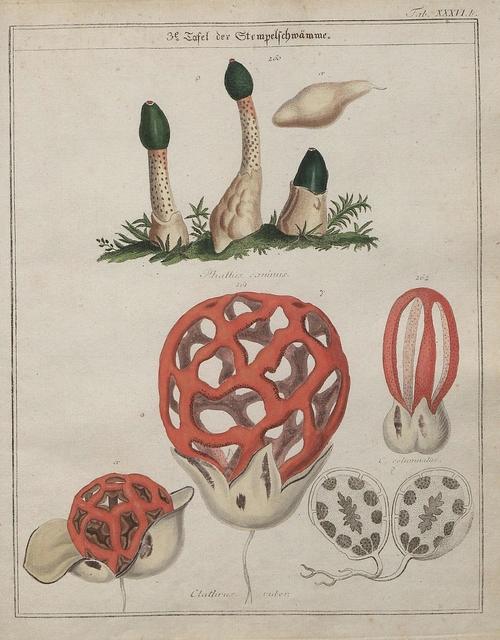 Das System der Pilze und Schwämme, 1817 p