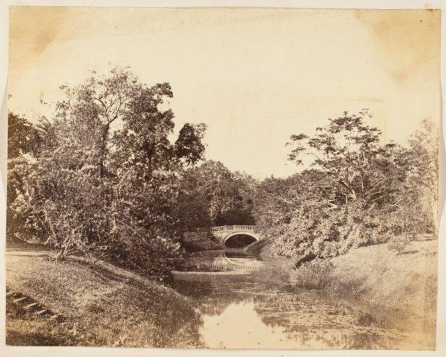 [Botanical Gardens, Calcutta]