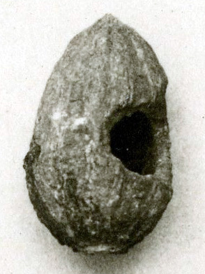 Pit from a Balanites tree with a hole caused by a rodent