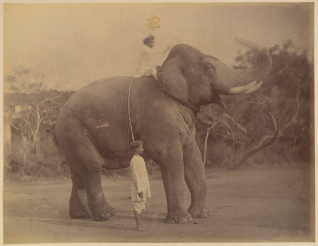 The Great Elephant Saluting