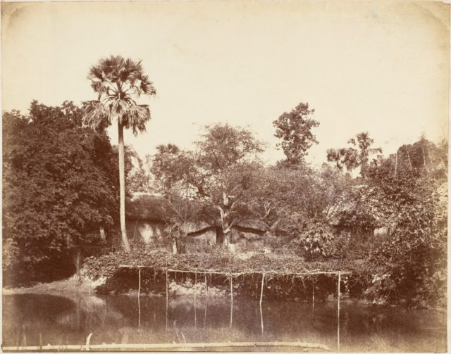 View in the Jungle, Bengal
