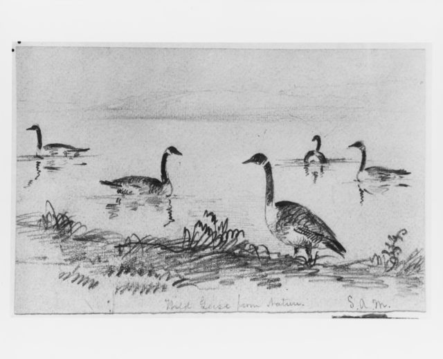 Wild Geese (from McGuire Scrapbook)