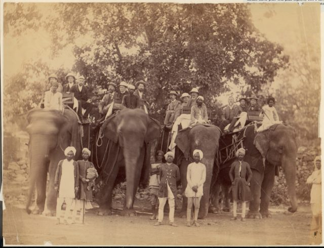 [Four Elephants with Western Travellers and Attendants, Jaipur, India]