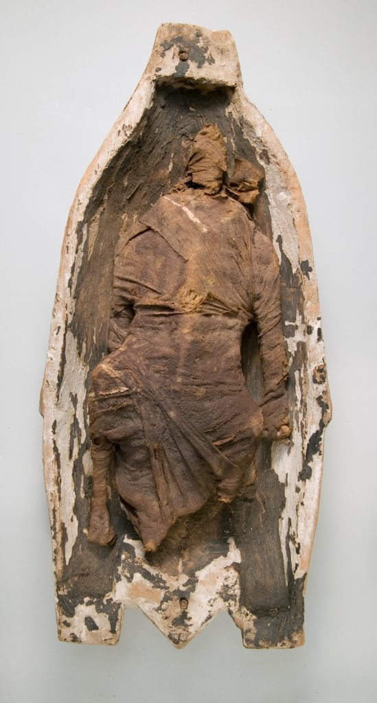 Preserved Goose in Half of a Wooden Case