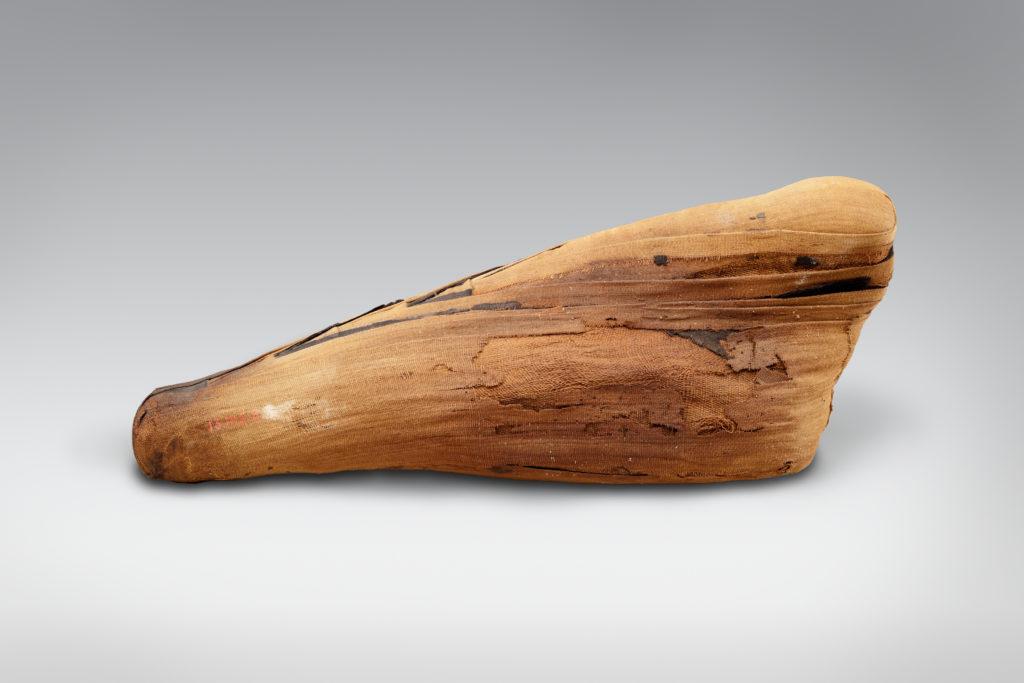 Sacred animal mummy of an ibis