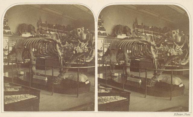 The Megatherium, British Museum