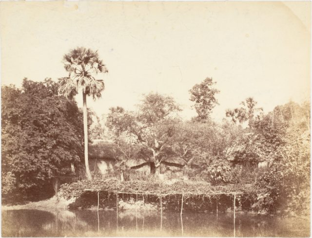 [View of the Jungle, Bengal]