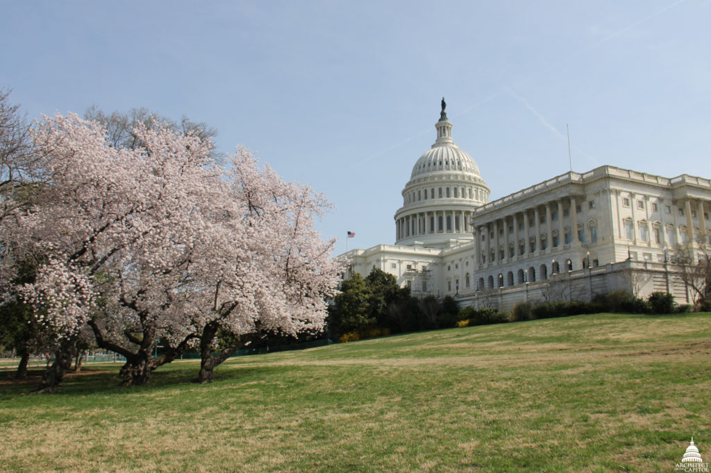 April Morning on Capitol Hill