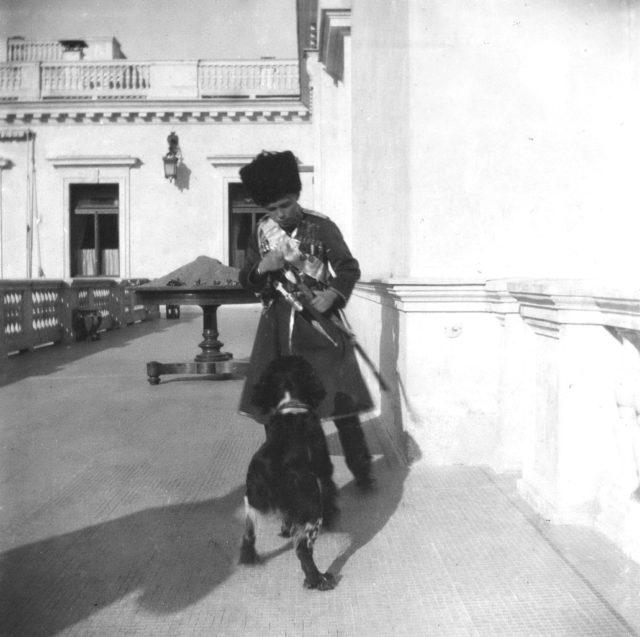 Tsarevich Alexei plays with spaniel Joey on the balcony of the Livadia Palace.