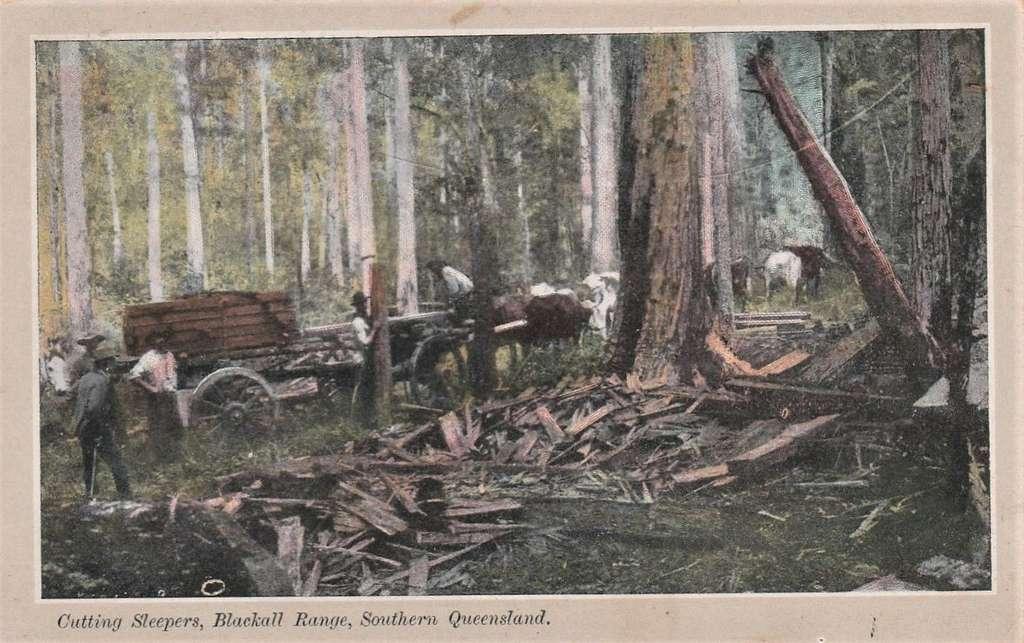 Cutting Sleepers, Blackall Range, Queensland - circa 1907