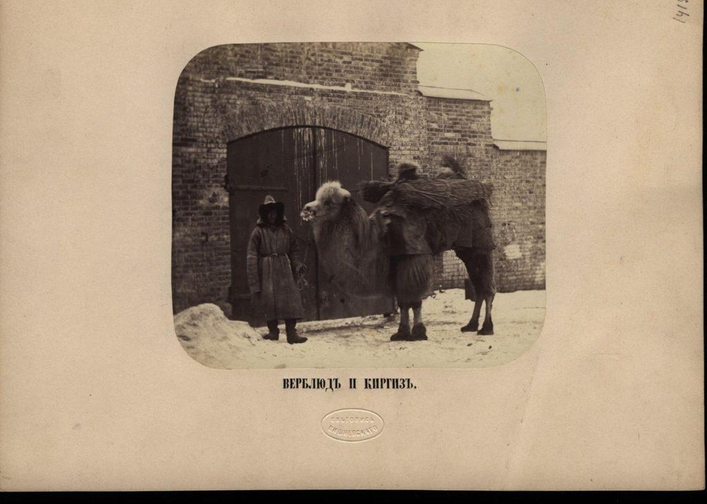 Astrakhan, Camel and Kyrgys