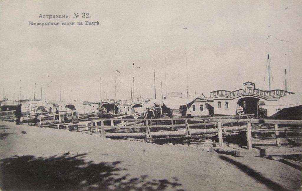 Astrakhan, Fish farming on Volga river