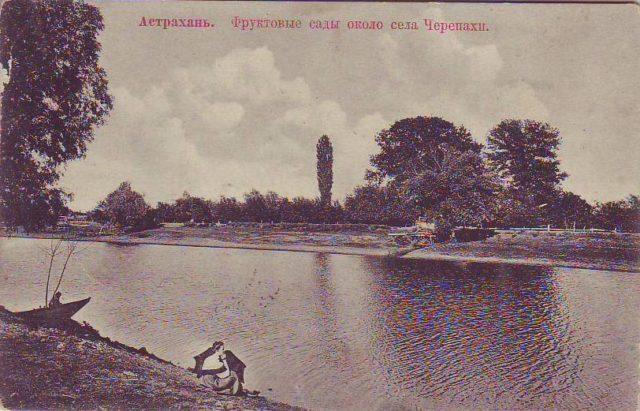 Astrakhan, fruit gardens