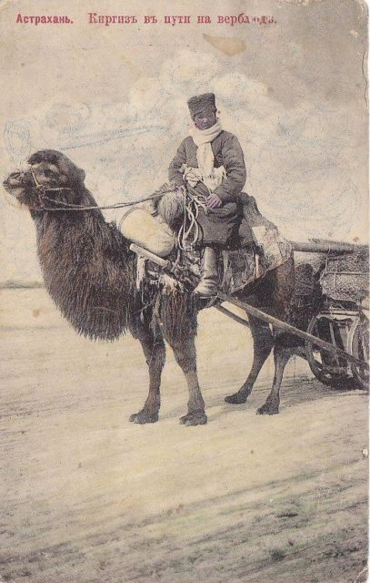 Kirghiz is on his way on a camel. Astrakhan, South Russia city on Volga River