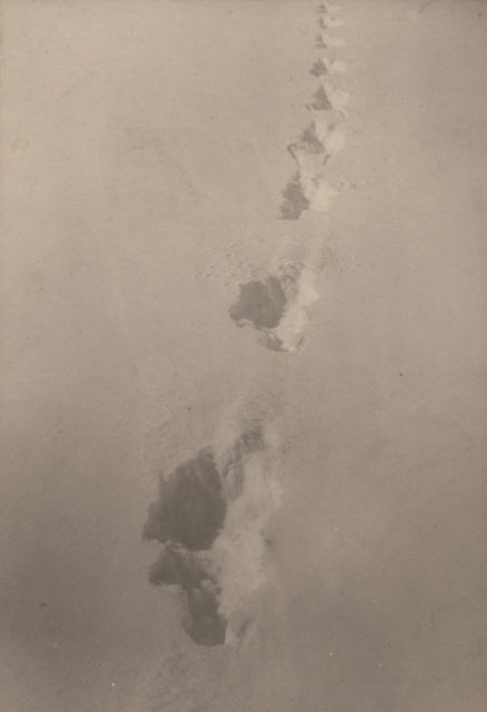 Wolf tracks, Jake Lake, Algonquin Park, date unknown