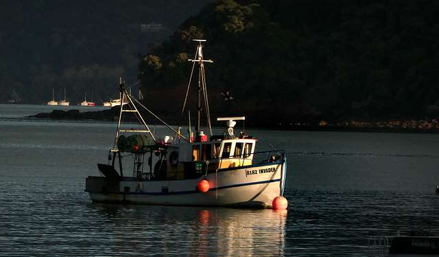 Morning anchorage Akaroa.