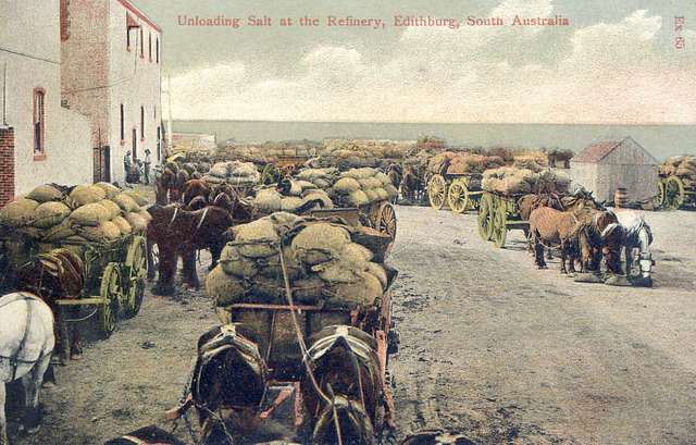 Unloading salt at the refinery at Edithburg, South Australia - circa 1906