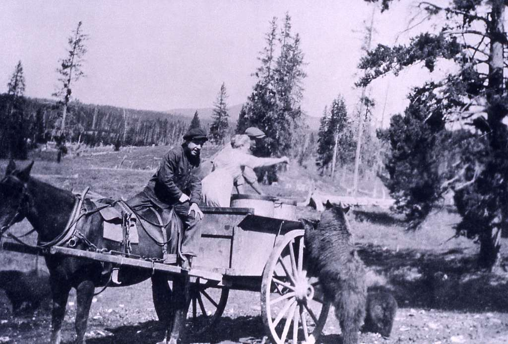 Bears being fed from garbage carts; Photographer unknown; No date