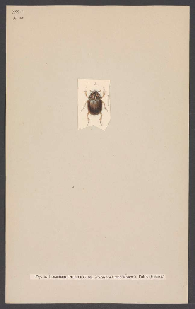 Bolboceras - Print - Iconographia Zoologica - Special Collections University of Amsterdam - UBAINV0274 001 05 0024