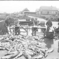 Fiskverkamenn í aðgerð á Duusplani í Keflavík, 1915