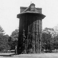View of the Redwood Tree House