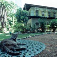 Cat relaxing in front of the Hemingway House: Key West, Florida