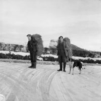 [Men at Frongoch, Bala, carrying hay for sheep on their backs during the hard winter of 1963]