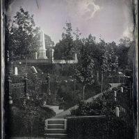 Gentian Path, Mount Auburn Cemetery