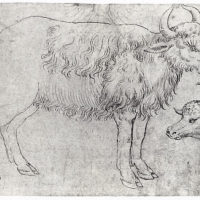 Study of Two Bovine Animals